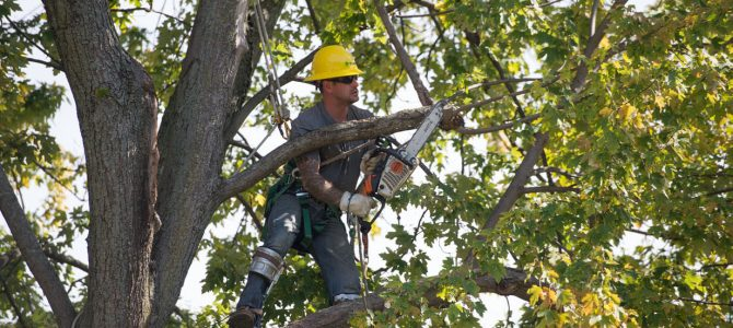 Arborists in Sutherland Shire